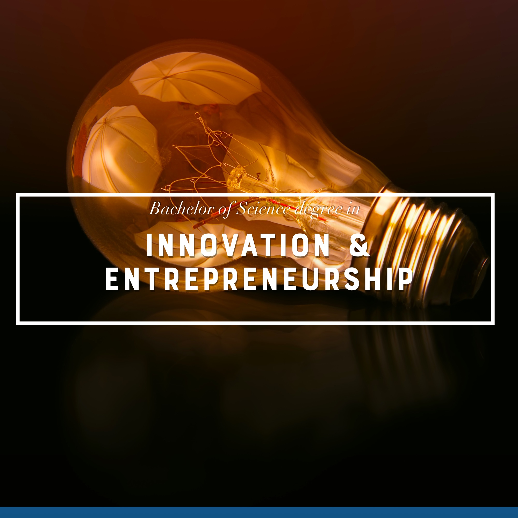Learn more about the Innovation & Entrepreneurship Programme